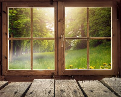 Fototapet Holzhütte mit Ausblick auf eine Waldlichtung im Frühling / Frühsommer bei Sonnenschein