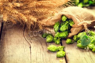 Fototapet Hop i väska och vete öron på trä knäckt gamla tabellen. Ölbryggeri koncept. Ingrediens för att brygga öl. Skönhet färska plockade humlekottar och vete närbild. Säck av humle och kärve av vete på vinta