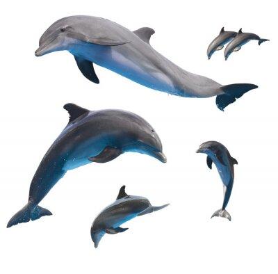 Fototapet hoppar delfiner på vitt