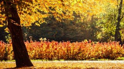 Fototapet höst landskap i park