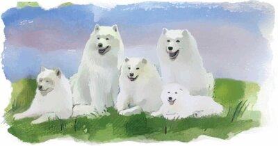 Fototapet hund husky