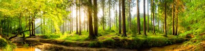 Fototapet Idyllisk skogen med bäck vid soluppgången