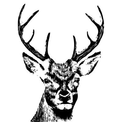 Fototapet illustration av en hjort huvud, grunge, silhuett isolerad på vitt