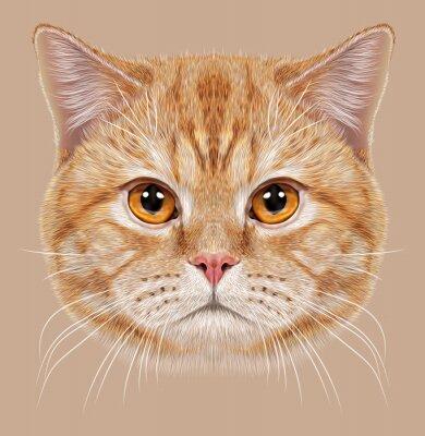 Fototapet Illustration av stående brittisk kort hår katt. Söt apelsin Huskatt med koppar ögon.