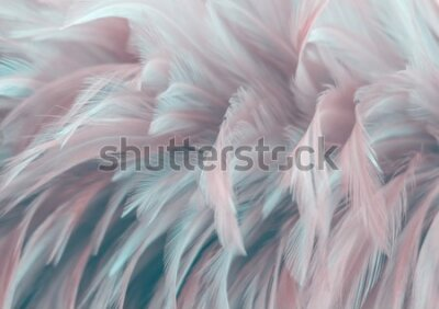 Fototapet Image nature art of wings bird,Soft pastel detail of design,chicken feather texture,white fluffy twirled on transparent background wallpaper Abstract. Coral Pink color trends and  vintage.