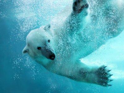 Fototapet Isbjörn vattens attack