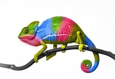Fototapet kameleont - färger