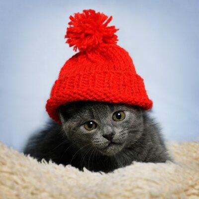 Fototapet kattunge i en röd hatt