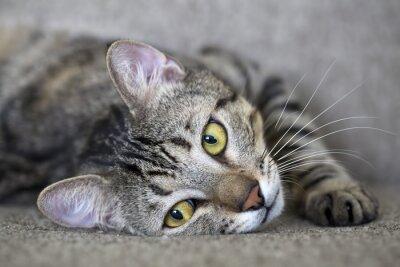 Fototapet Kedi