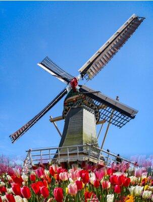 Fototapet Keukenhof - Holland