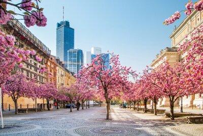 Fototapet Kirschbaumblüte i Frankfurt, Deutschland