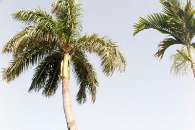 Fototapet Kokosnöt och blå himmel på sommarstranden
