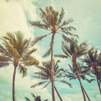 Fototapet kokospalm träd och blå himmel moln med vintage ton.