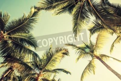 Fototapet Kokospalmer över ljus himmel bakgrund. Vintagestil. Tonat foto med filtereffekt