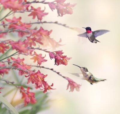 Fototapet Kolibrier och röda blommor