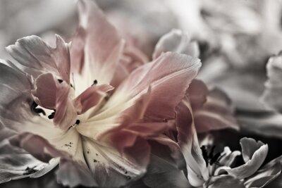 Fototapet Konst av närbilder tulpaner, suddiga och skarpa