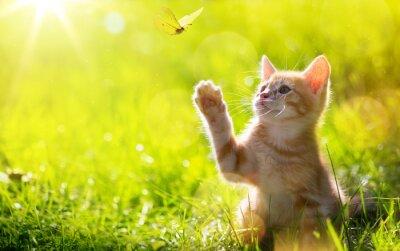 Fototapet konst Unga katt / kattunge jakt en fjäril med Motljus