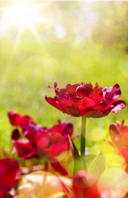Fototapet konstfjäder blommig bakgrund
