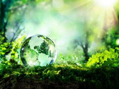Fototapet kristall klot på mossa i en skog - miljö begreppet