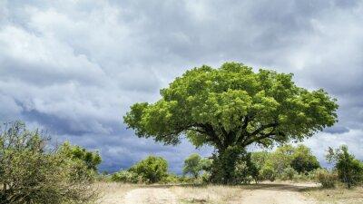 Fototapet Kruger National Park landskap, Sydafrika