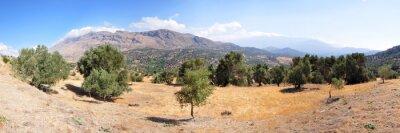 Fototapet Landskap olivträd på ön Kreta