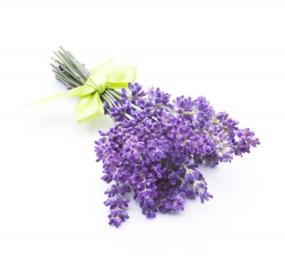 Fototapet lavendel