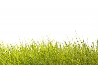 Fototapet Leaves of Grass