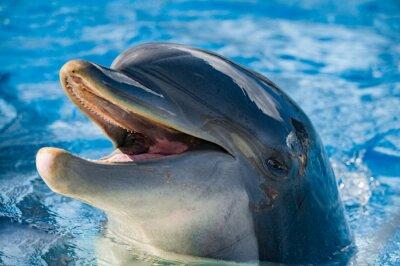 Fototapet leende av en delfin tittar på dig
