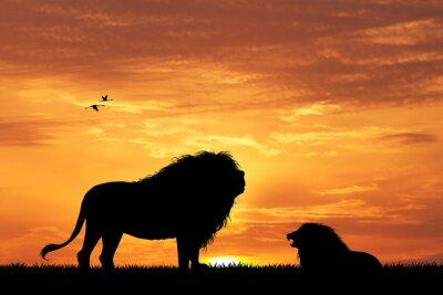 Fototapet lejon silhuett vid solnedgången