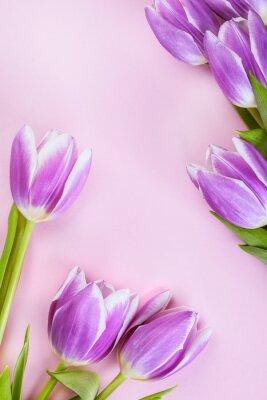 Fototapet Lila tulpaner på rosa bakgrund