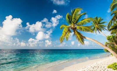 Fototapet Lonely beach i Maldiverna