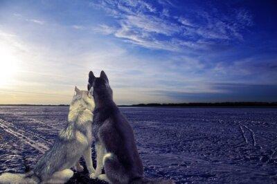 Fototapet lovers - två hundar möts solnedgången