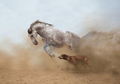 Fototapet Lusitanian häst