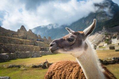 Fototapet Machu Picchu, UNESCO: s världsarv. En av de nya sju underverk i världen