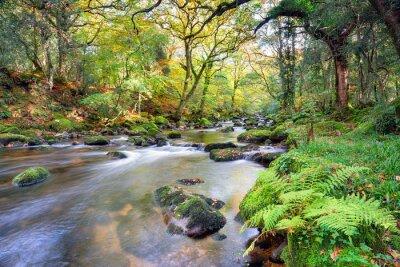 Fototapet Magical Forest River