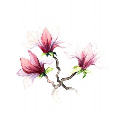 Fototapet magnolia blommor akvarell isolerad på den vita bakgrunden