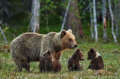 Fototapet Mamma björn och ungar