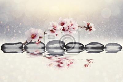 Fototapet mandel blommor bakgrund