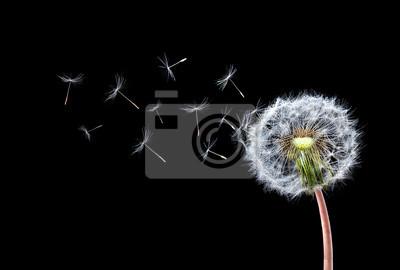 Fototapet maskros Flying