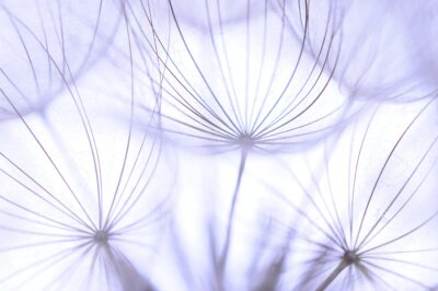Fototapet maskros frön