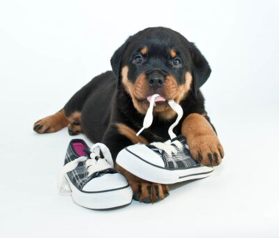 Fototapet Mina skor!