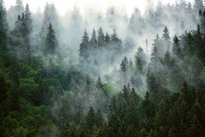 Fototapet Misty mountain landscape