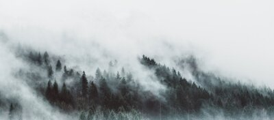 Fototapet Moody forest landscape with fog and mist