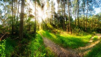 Fototapet Morgen scheint auf Wanderweg im Wald