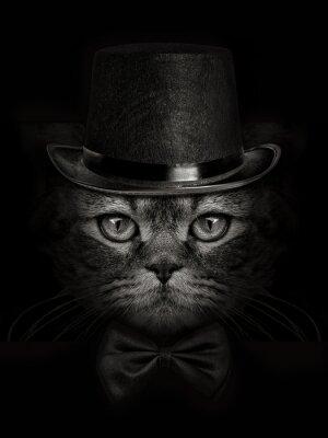 Fototapet mörk mynnings katt närbild på en hatt och slips fjäril