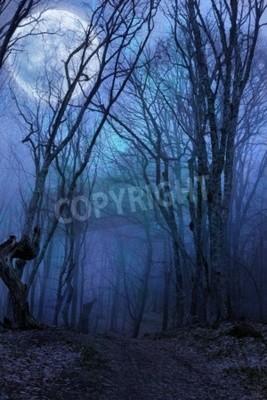 Fototapet mörk natt skog agaist fullmåne