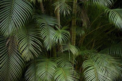 Fototapet Mörk tropisk djungel palmblad bakgrund