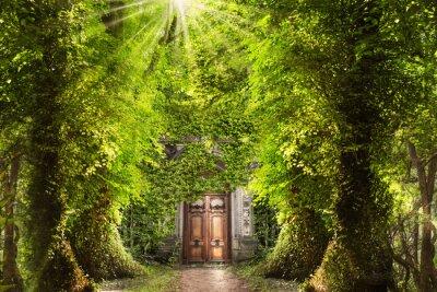 Fototapet Mystic plats i skogen