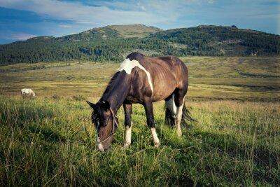 Fototapet närbild av en häst som betar i ängen, i bakgrunden berg och blå himmel