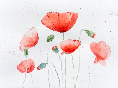 Fototapet Natural drawing of poppy flowers